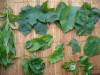 Baumblätter – essbares Wildgrün von oben