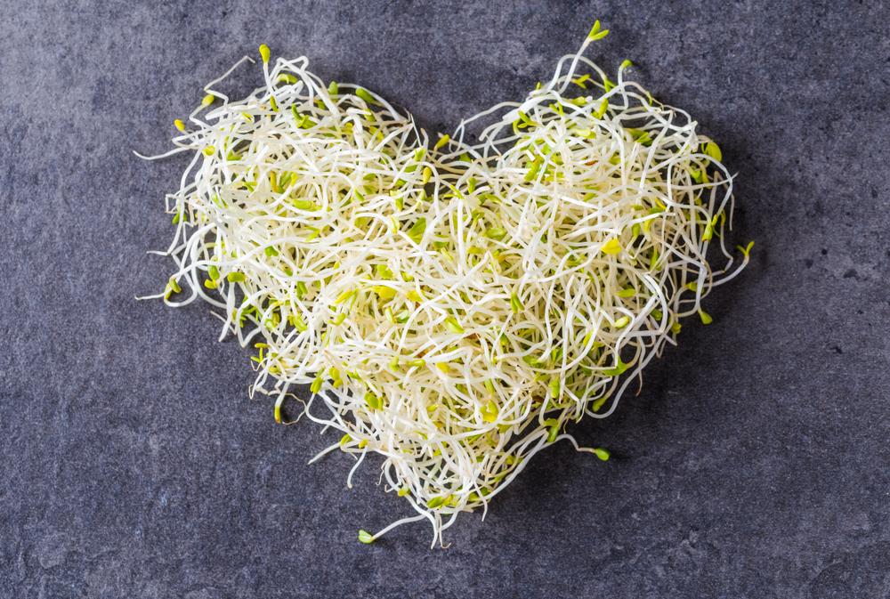 Beste Anleitung für das Ziehen von Alfalfa-Sprossen