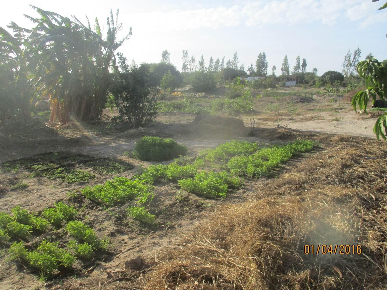 Biolandwirtschaft im Senegal