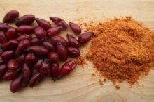Hagebutten – beste Vitamin C-Quelle im Winter