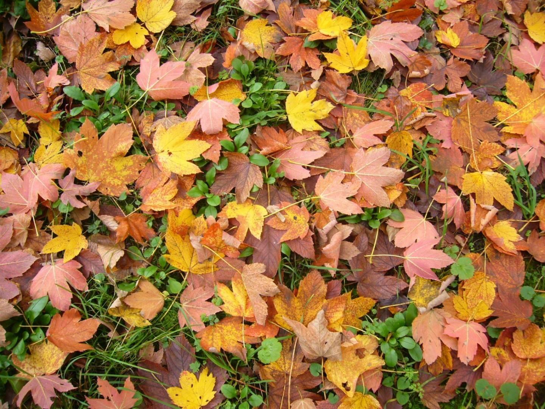 Herbstfreude 3