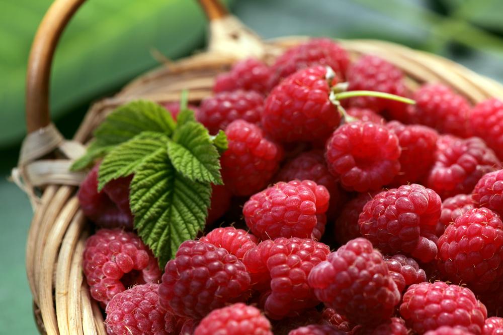 Die Liste der schleimfreien und säurebindenden Lebensmittel!