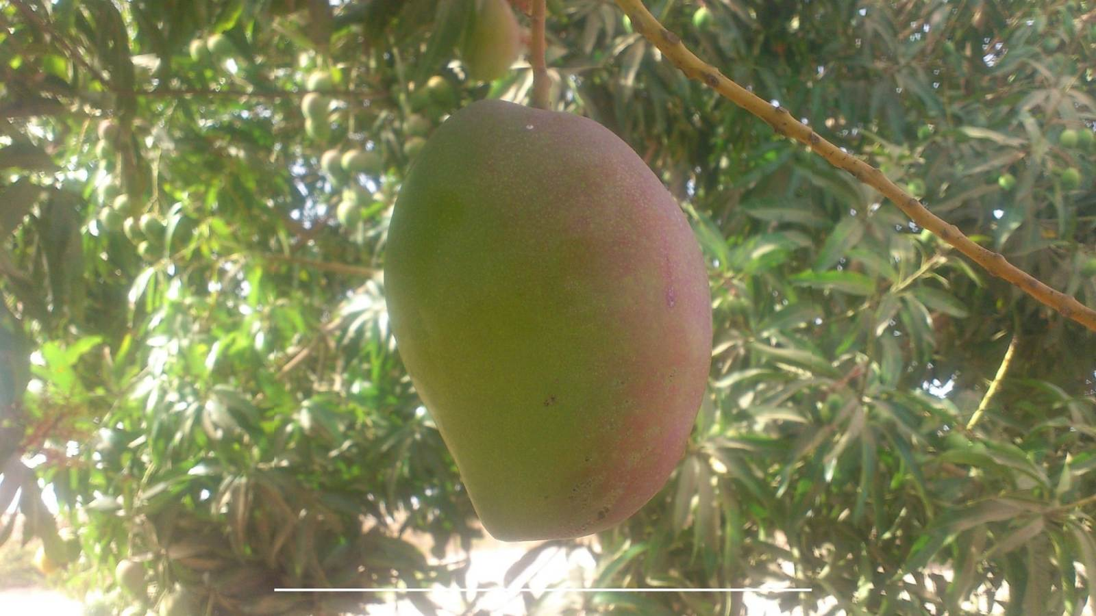 Mango B