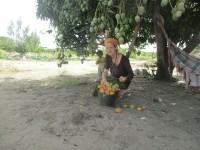 Baumgereifte Früchte aus dem Sénégal