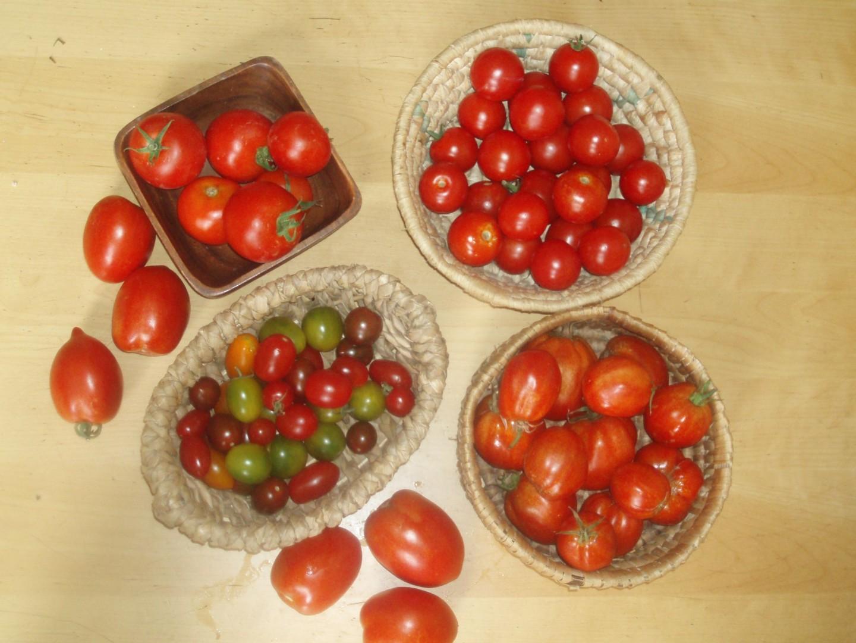 Tomaten - Töchter der Sonne