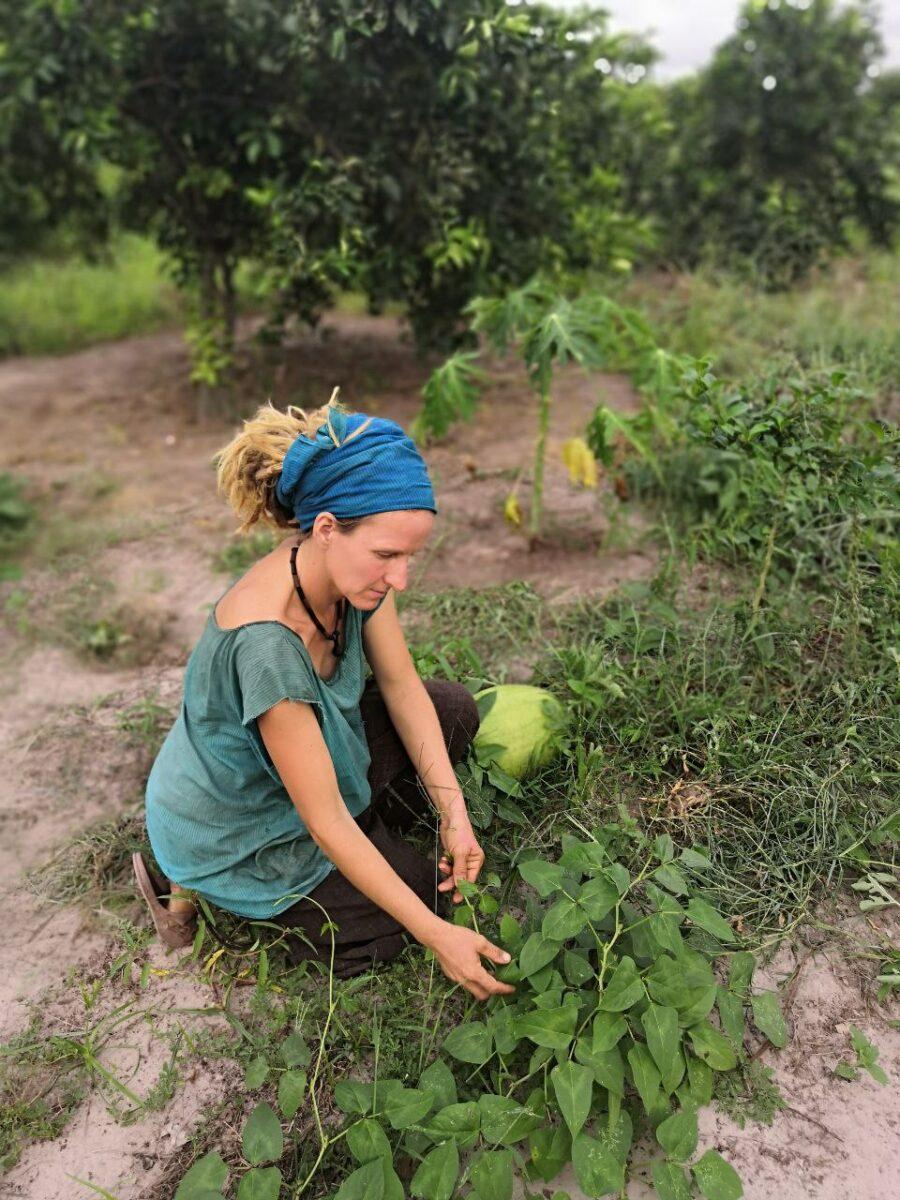 Permakultur im Senegal