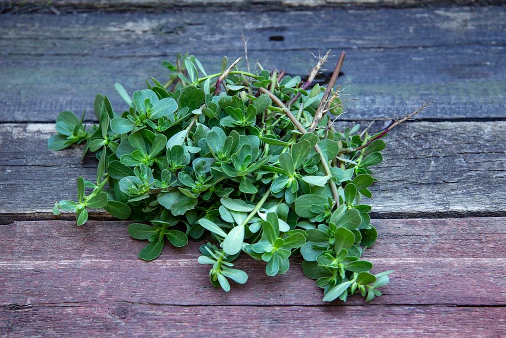 Portulak - eine geniale Wildpflanze mit Omega-3