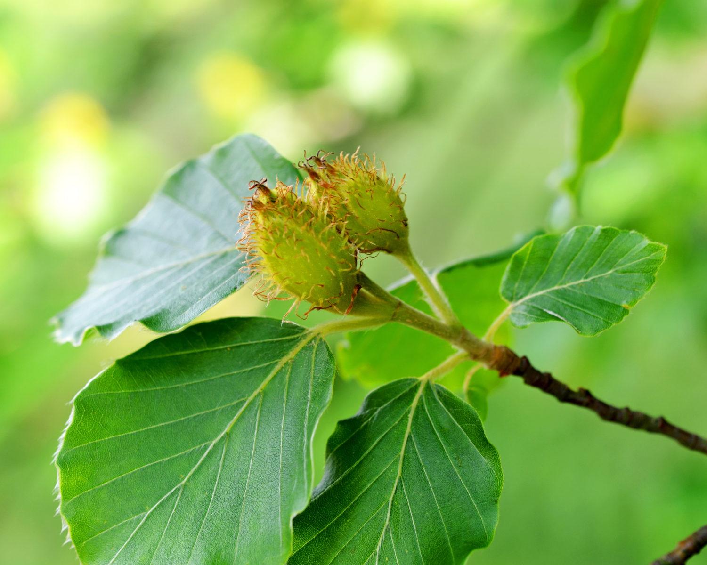 Früchte bäume blätter und und ihre Laubbäume Bäume